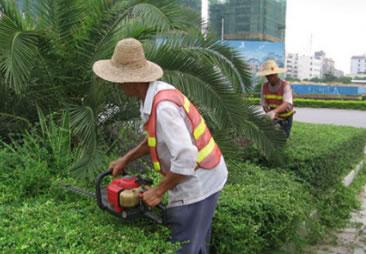园林绿化及维护